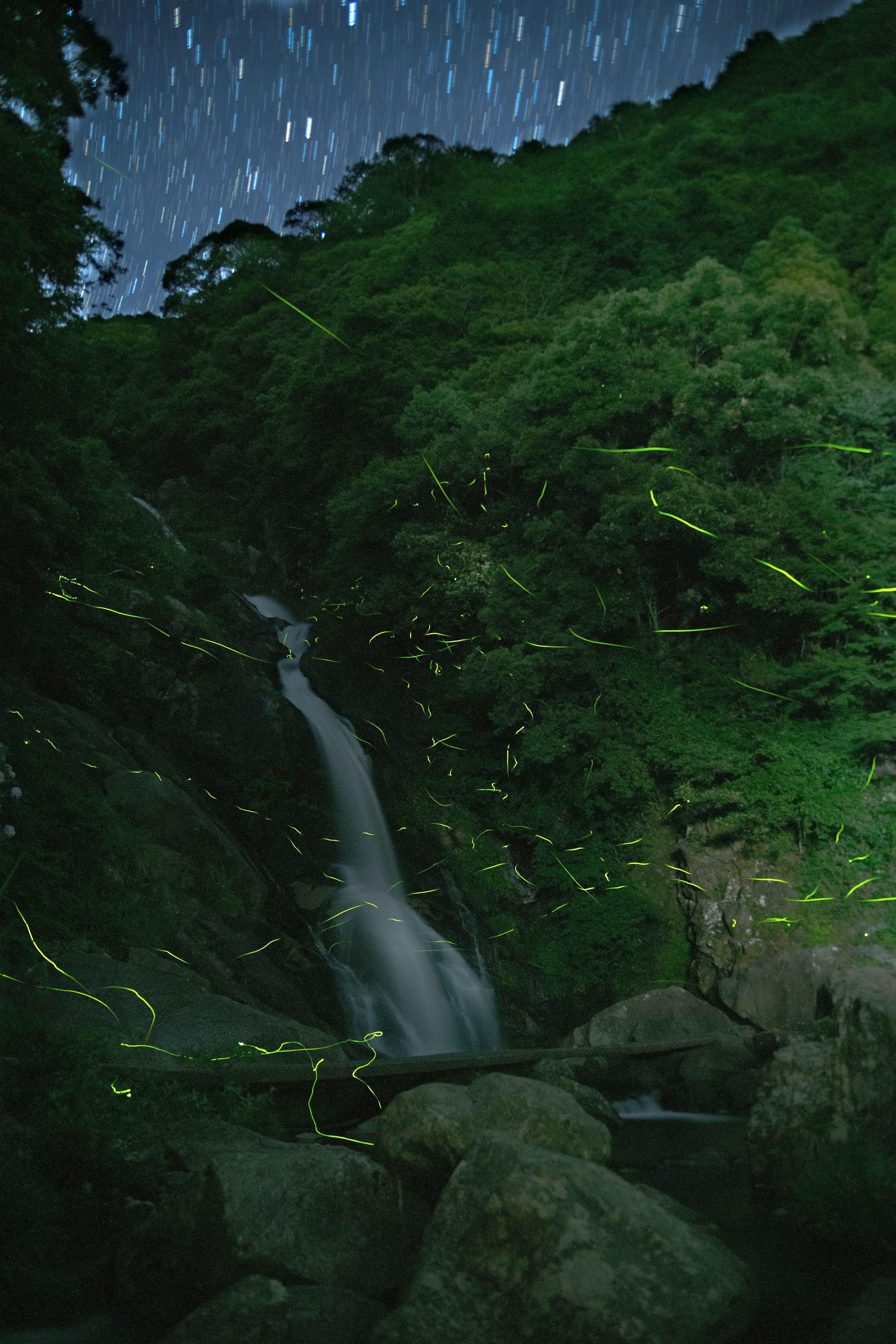 唐津市 見返りの滝 ホタル